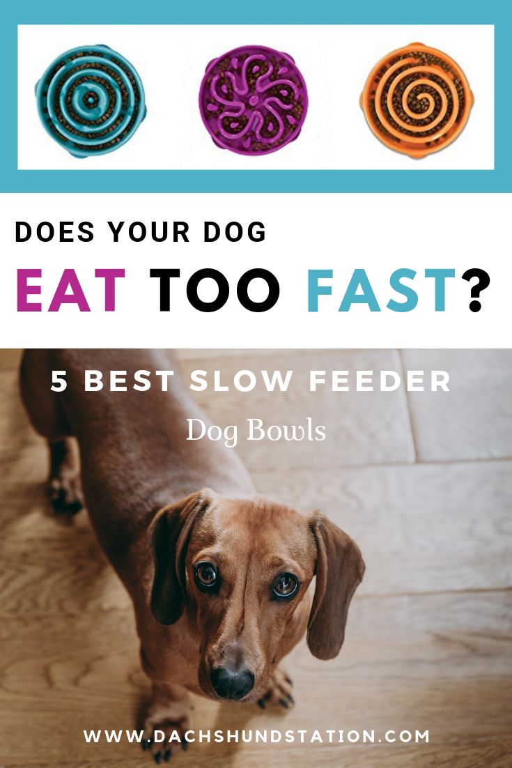 Selecting Best Slow Feeder Dog Bowls Dog Eats Too Fast Dog Bowls Dachshund Dogs