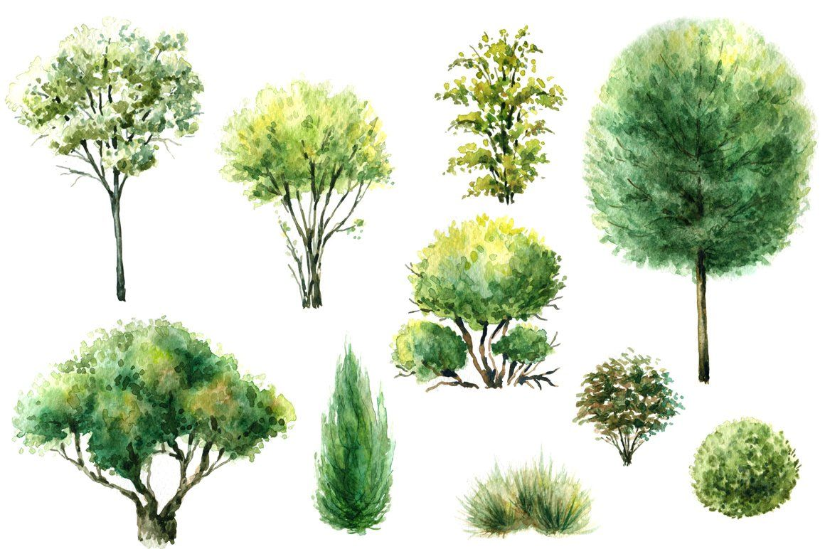 Watercolor Trees And Bushes Watercolor Trees Watercolor
