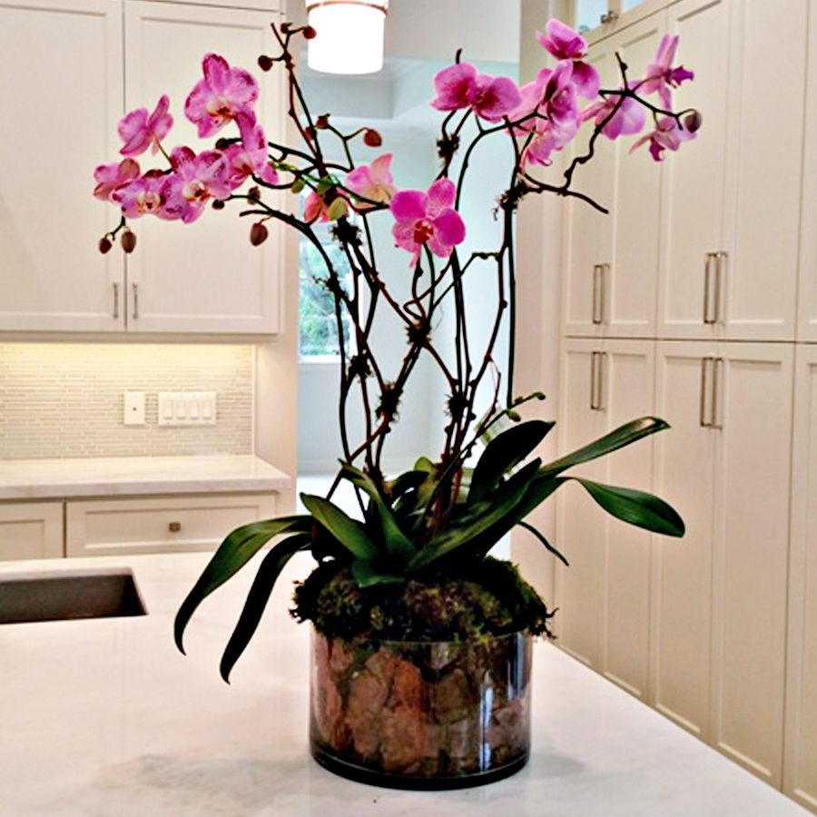 Modern Sophisticated Phalaenopsis Orchid Arrangement Orchid Arrangements Phalaenopsis Orchid Orchids