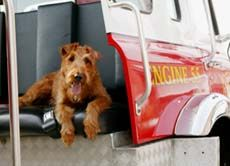 From Firehouse Dog Dog Films Dogs Movie Tv
