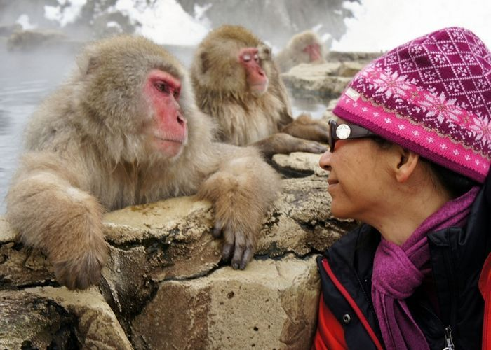 A Tourist Looks At Japanese Snow Monkeys In A Hot Spring In The
