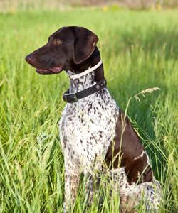 Hunting Dog Names: Explore our List of Names for your
