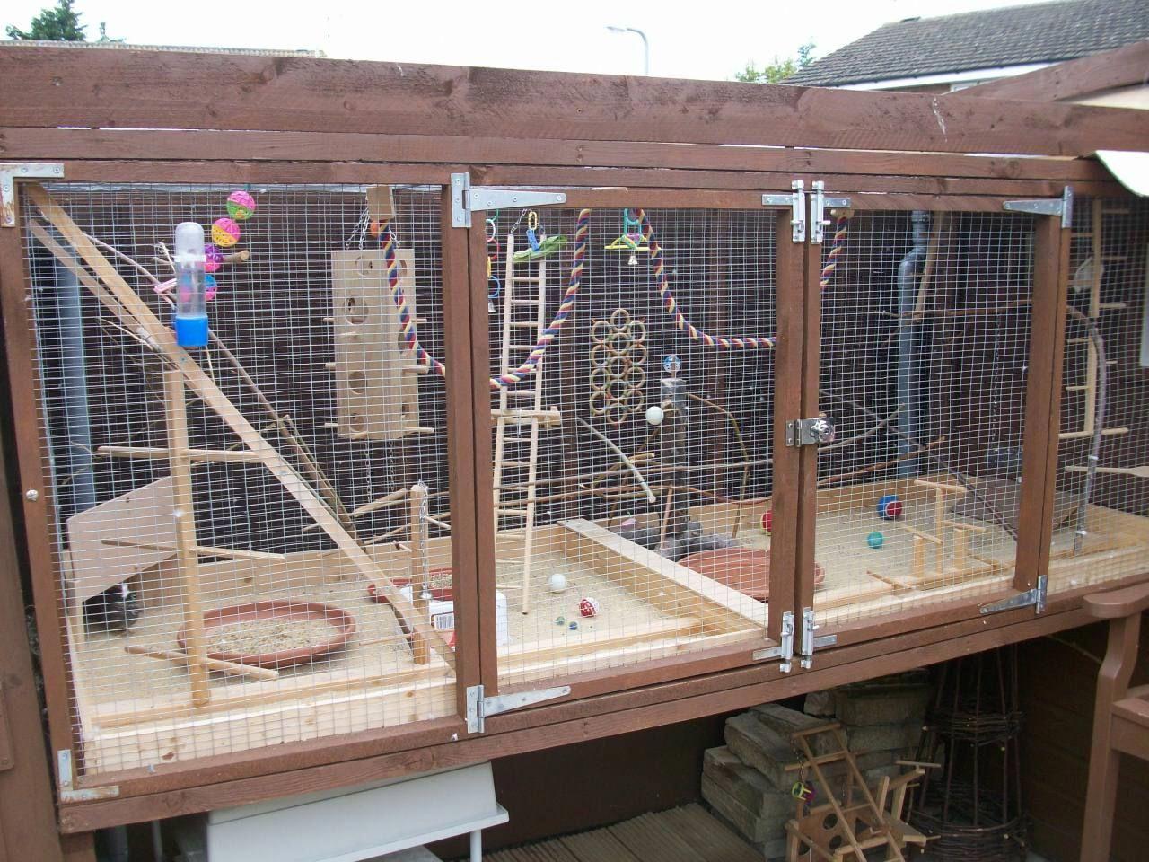 Pauls aviarybudgiesbudgerigarsbudgie illnessbudgie breedingnest boxes also best aviaries ideas images on pinterest in bird aviary rh