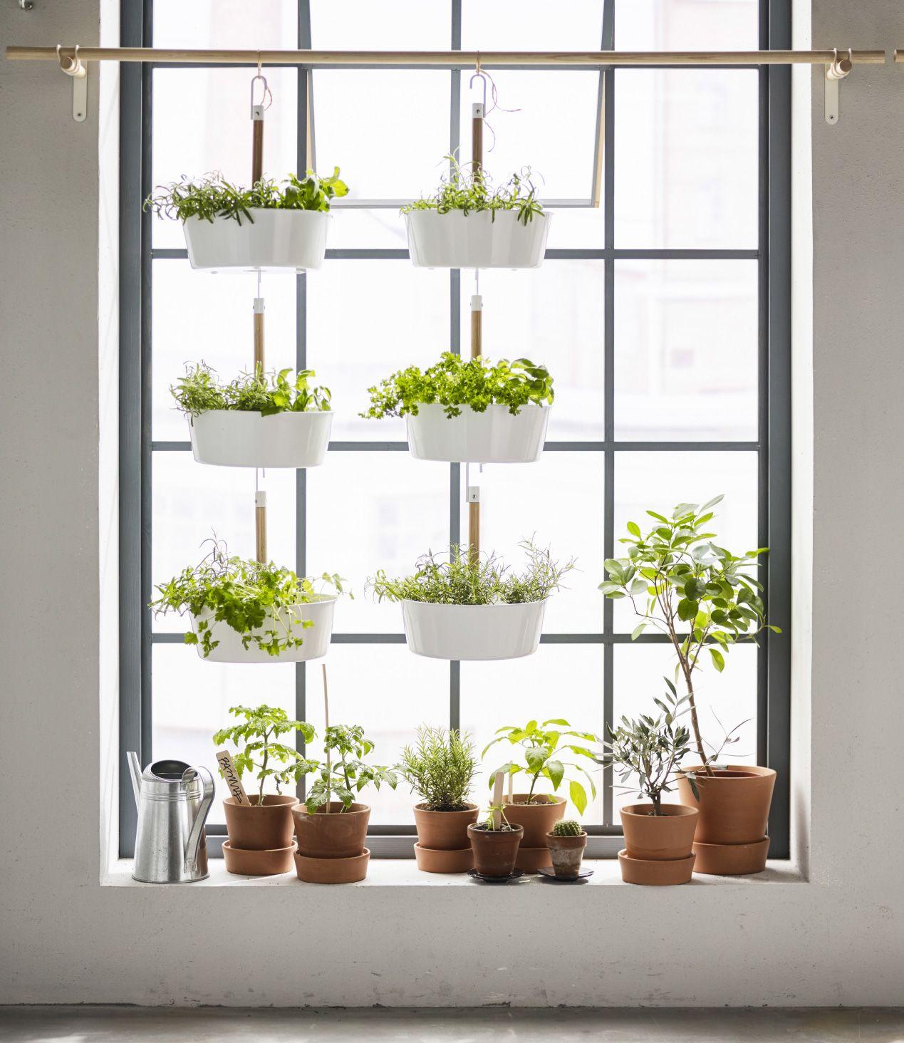 Offrez Vous Un Coin De Nature En Suspendant Vos Plantes Ikeahome