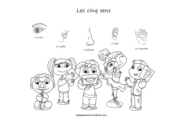 Activites Sur Le Theme Des 5 Sens 5 Sens Activites 5 Sens 5 Sens Maternelle