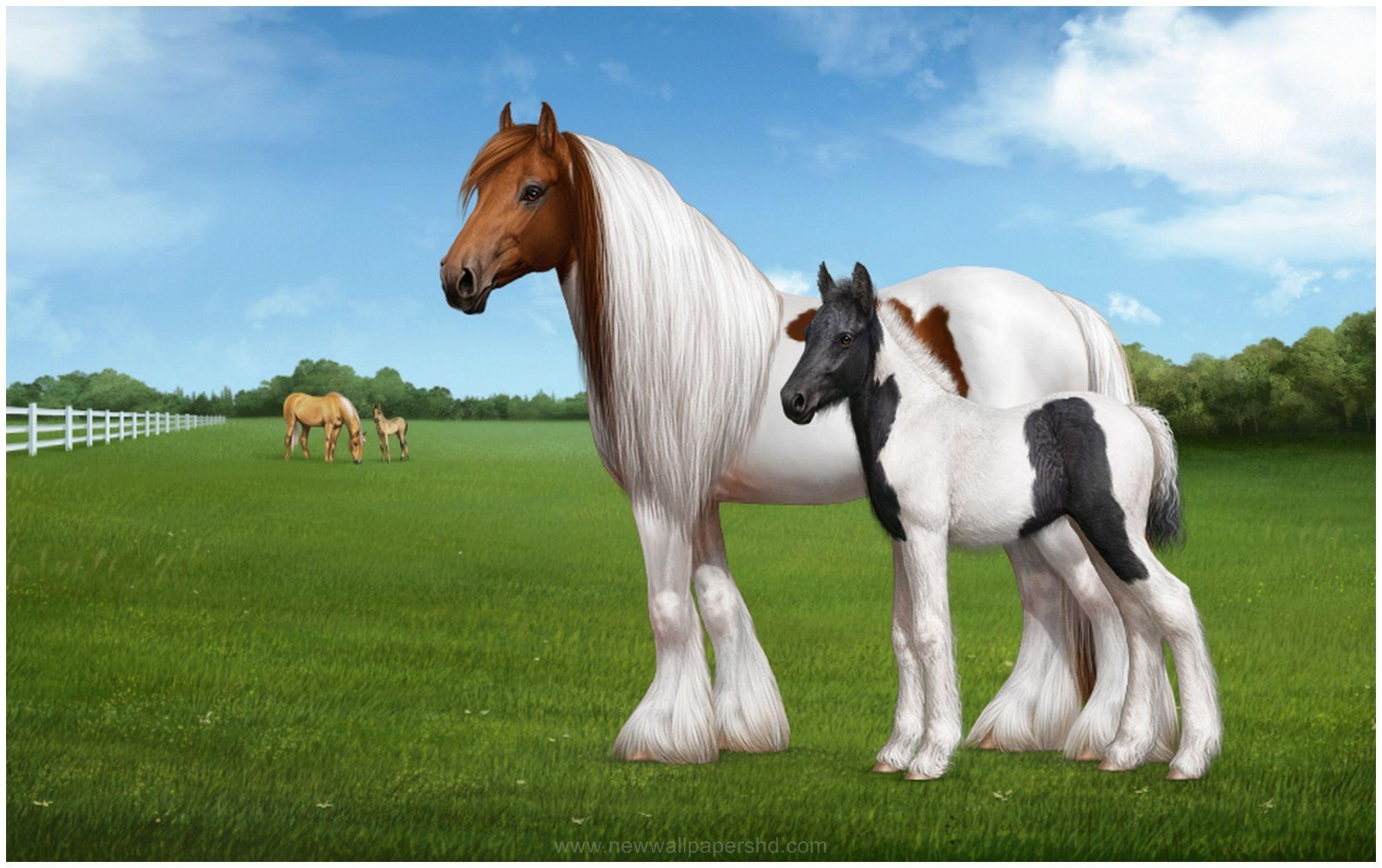 Hd wallpaper horse - Gypsy Horse Hd Wallpaper Wallpapers Pinterest Gypsy Horse And Hd Wallpaper