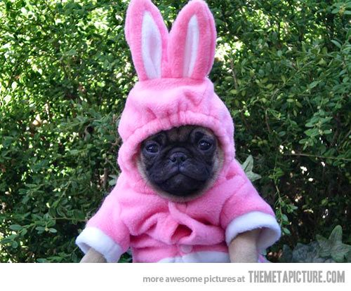 Bunny puppy is not amused…