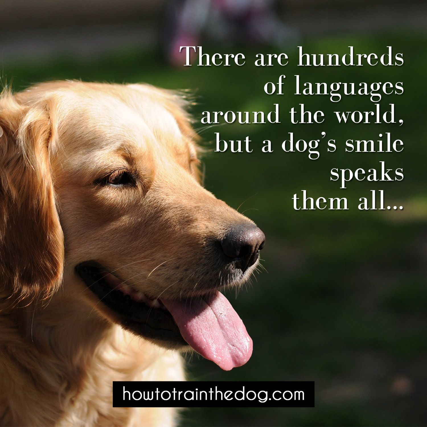 Quotes About Dog Friendship There Are Hundreds Of Languages Around The World But A Dog's