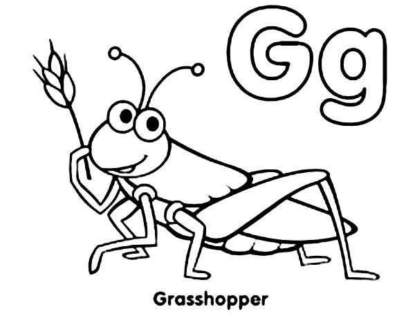 Pin By Guylaine Labbe On Bug Theme Preschool Coloring Pages Drawings Cartoon Drawings
