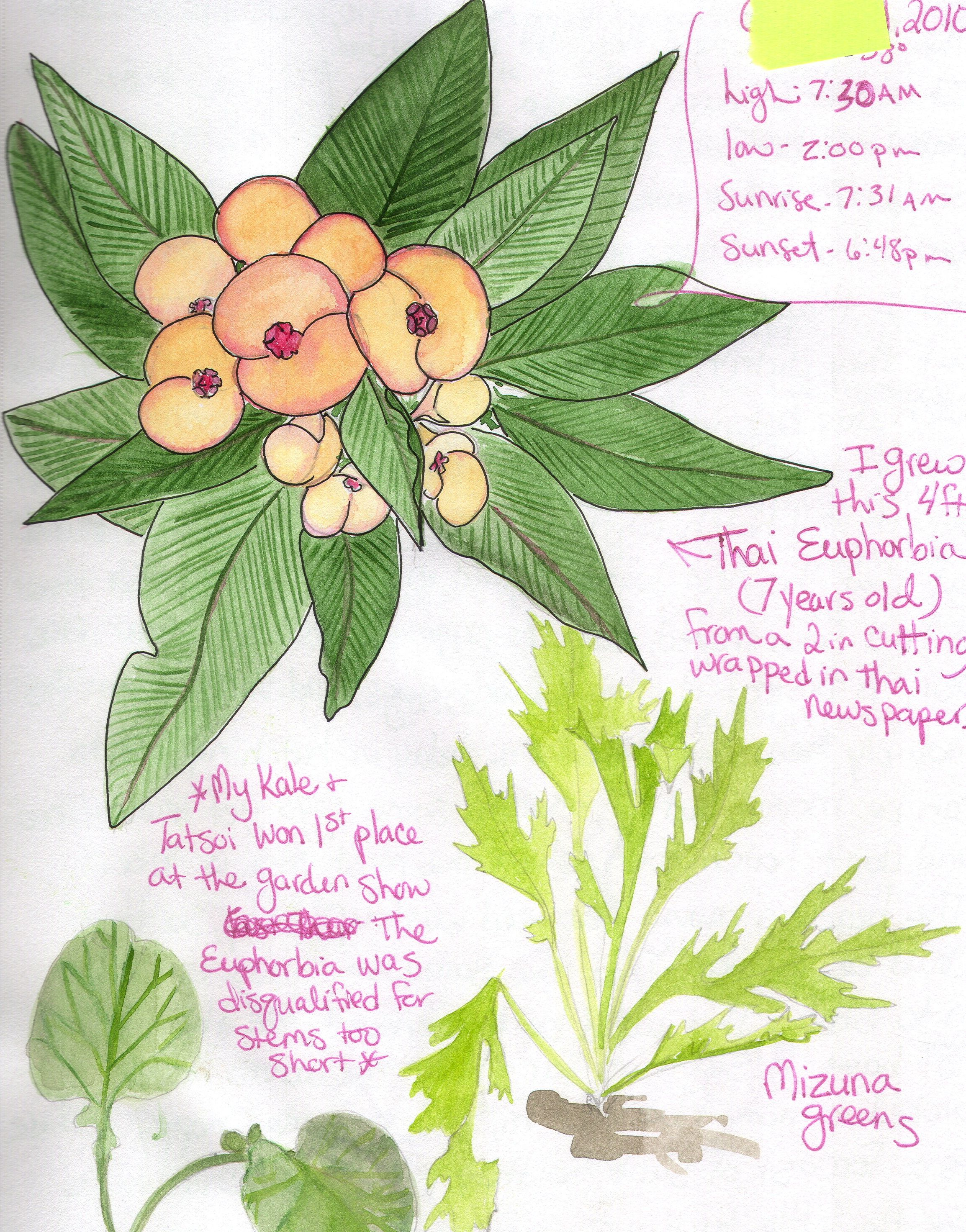 This Is A Thai Euphorbia Drawing From My Nature Journal It Came From A Tiny Cutting Mailed From