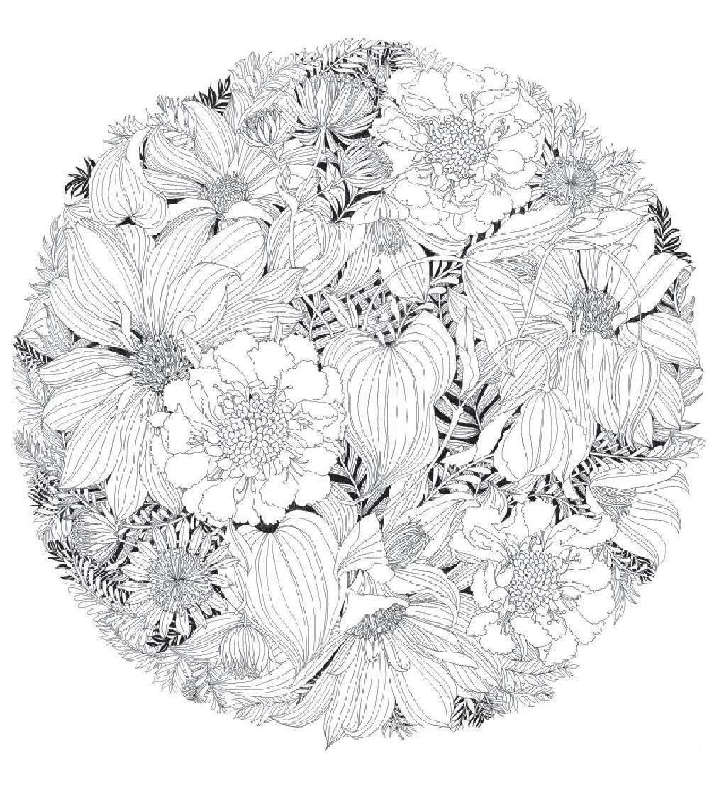 Floribunda. Flores para pintar / mtm editores | Pintar, Flores y ...