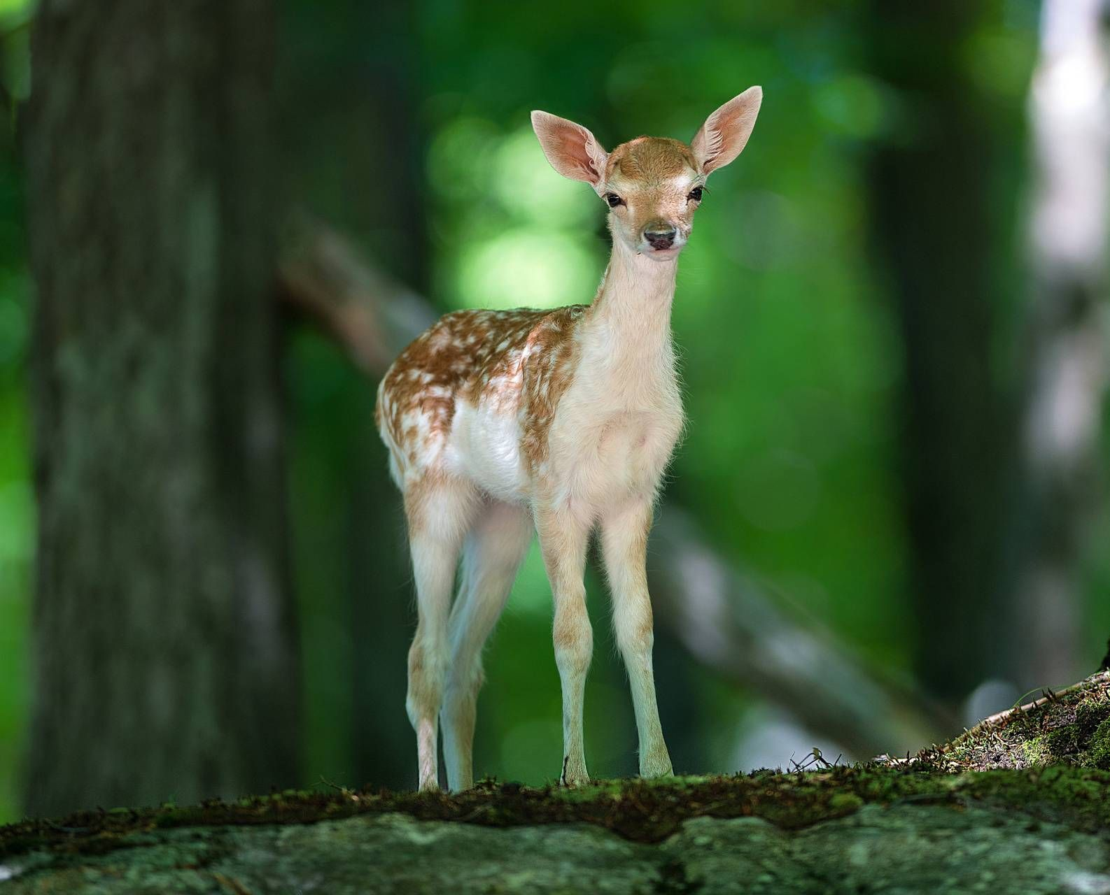 #nature #animal #pets #love #cute #animallovers #animallover #naturephotography #sweety #beauty
