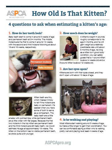 Print & Post How to Tell a Kitten's Age ASPCA