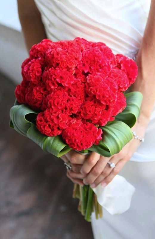 Pin On The Bouquet Reds