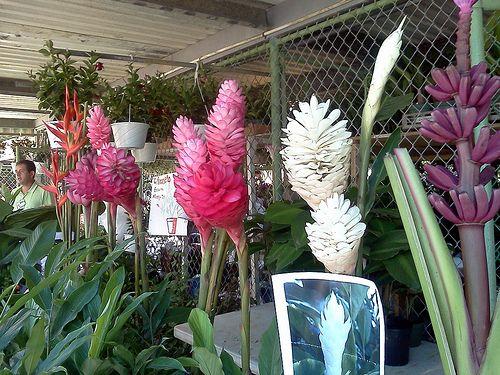 Img 20130706 110046 Flower Festival Flowers Puerto Rico