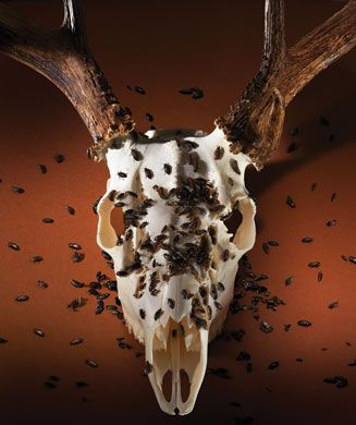 Kayak Wall Mount >> DIY Taxidermy: 3 Ways to Make Your Own European Mount | Deer skulls, Taxidermy, Deer decor