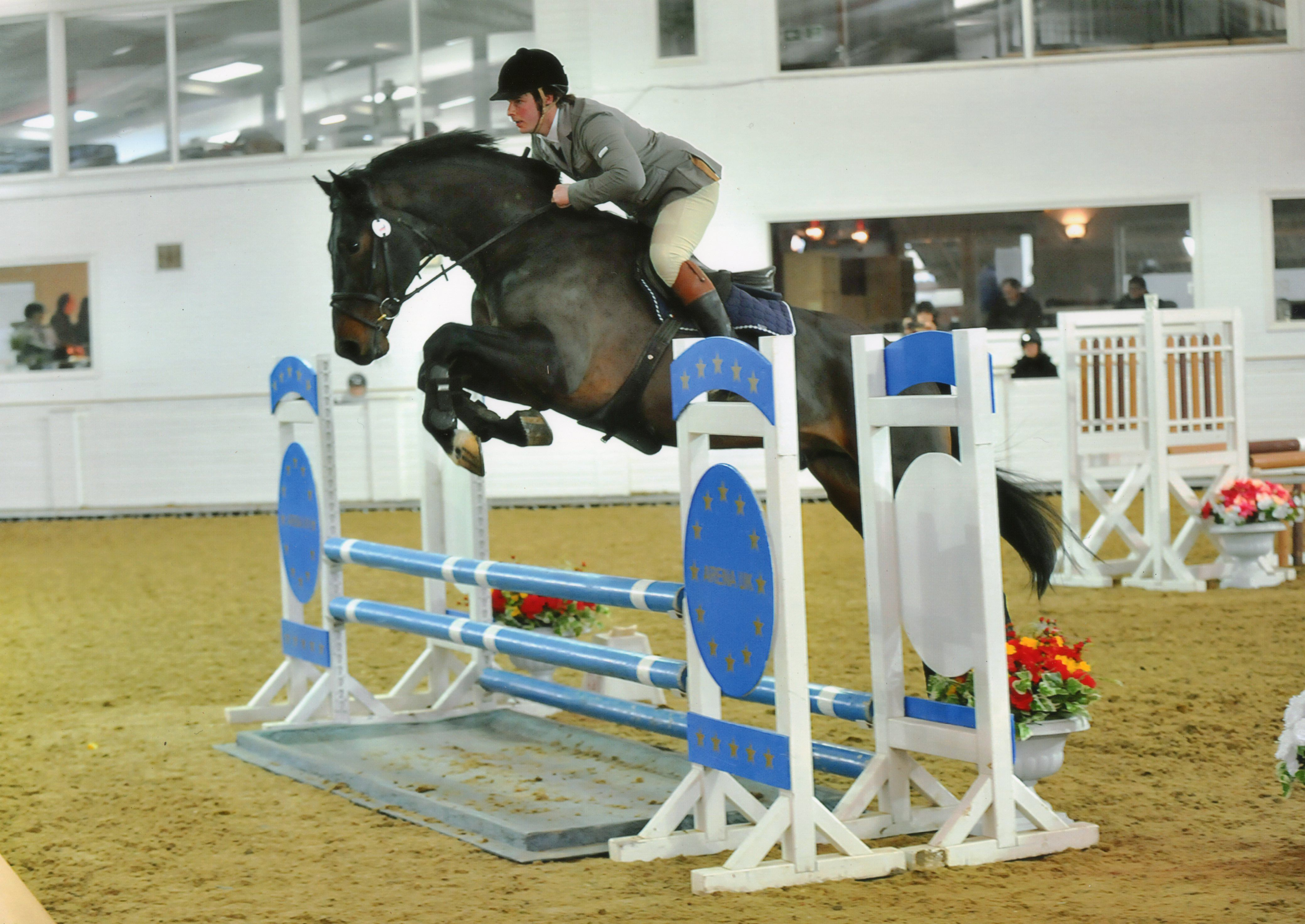 This 16.2hh five-year-old bay #gelding could be the #allrounder for you   For sale on #HorseDeals