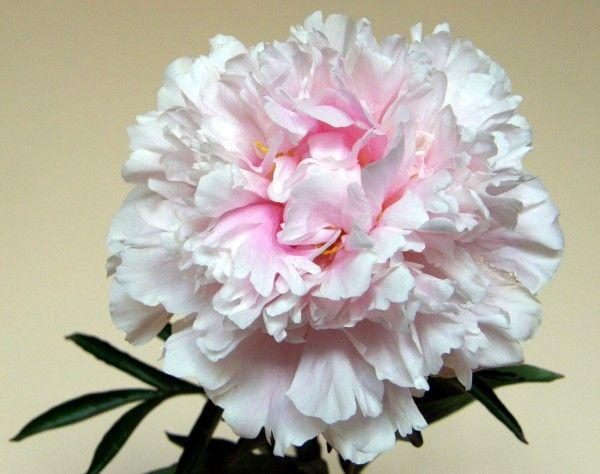 Kwiaty Ciete 4 Jpg 600 474 Flowers Rose Plants