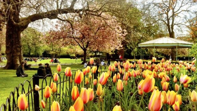 6 Stunning Images of Ireland in Spring | Images of ireland, Dublin city,  Ireland in spring