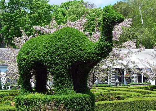the green animals topiary garden photo courtesy the preservation society of newport county - Green Animals Topiary Garden