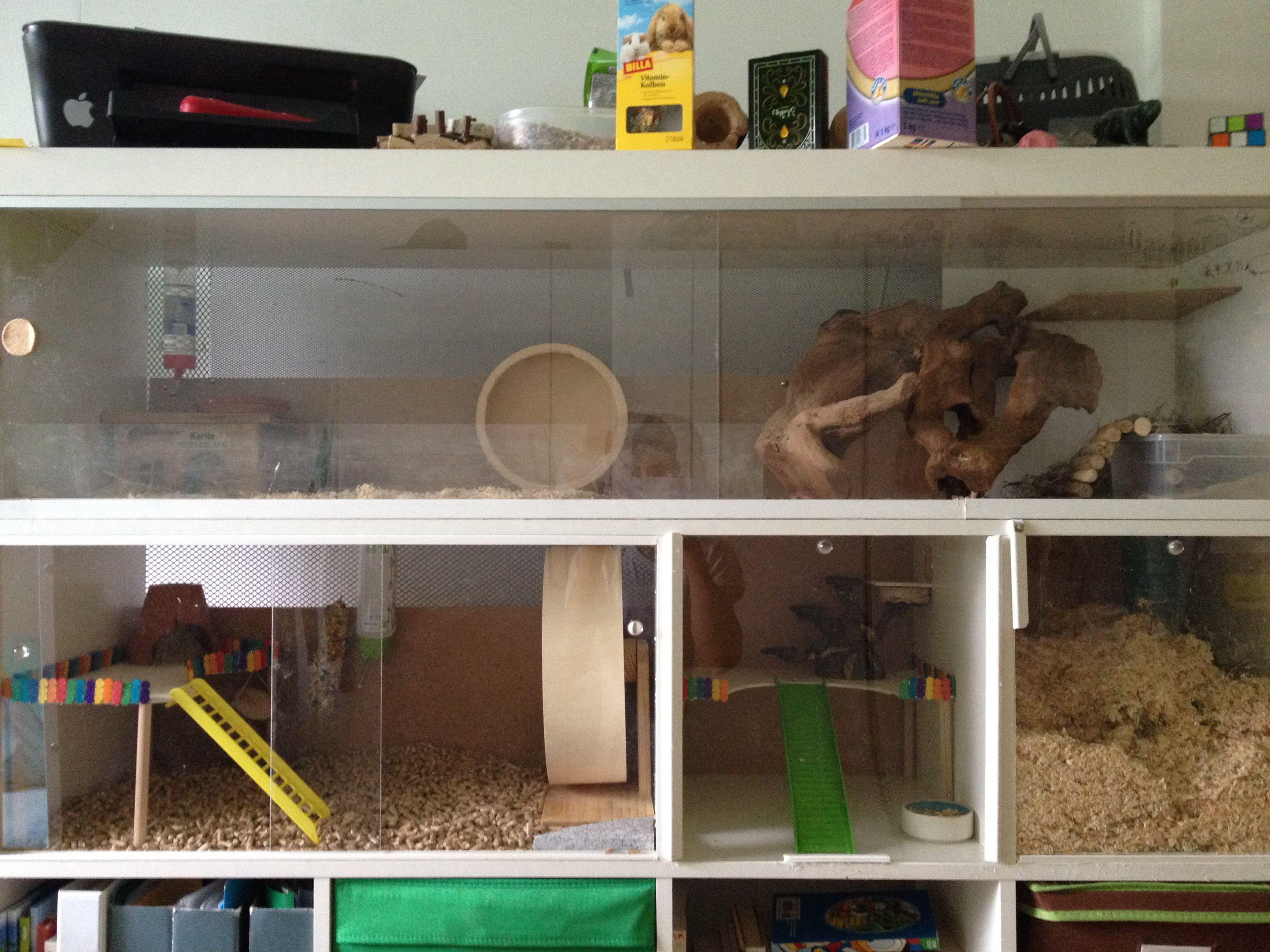 Diy Ikea Hamster Cage Hamster Diy Hamster Toys Small Pets
