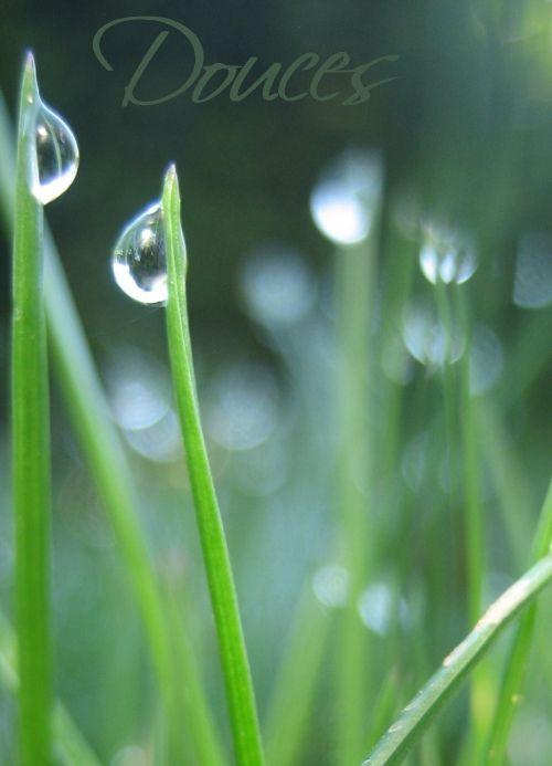 ranní rosa v trávě