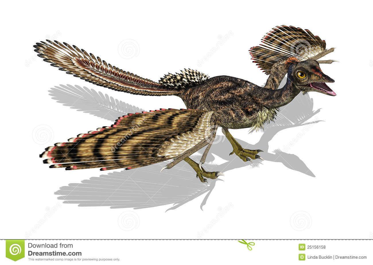 archaeopteryx - Google-Suche