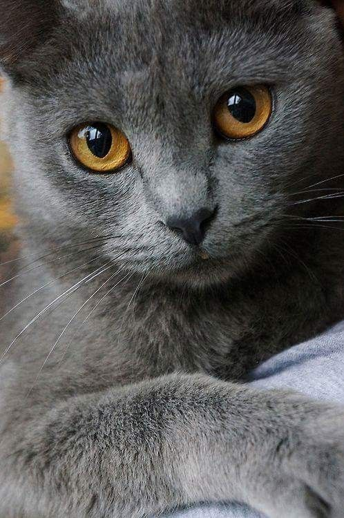 Pin by Erica West on Cats&kittens | Beautiful cats