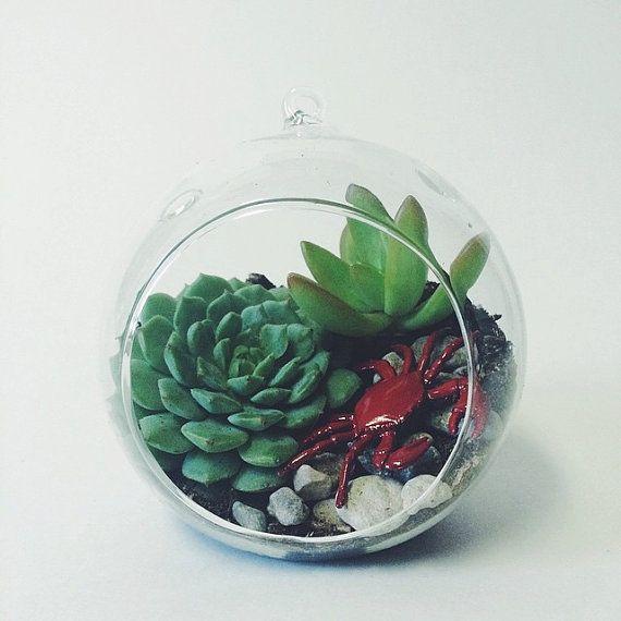 Small Hanging Succulent Terrarium Kit By Twotreesbotanicals