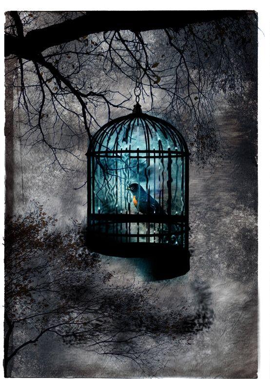 Blue Bird In Blue World Color Splash Bilder Bunte Bilder Fotokunst