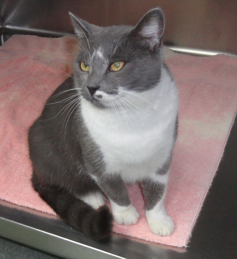 Adopt Cameron on Animal shelter, Animals, Animal rescue