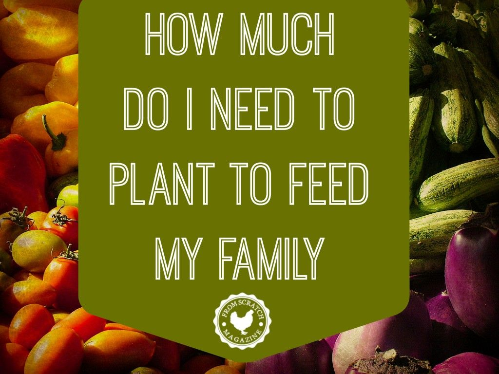 how much do i need to plant to feed my family garden planting