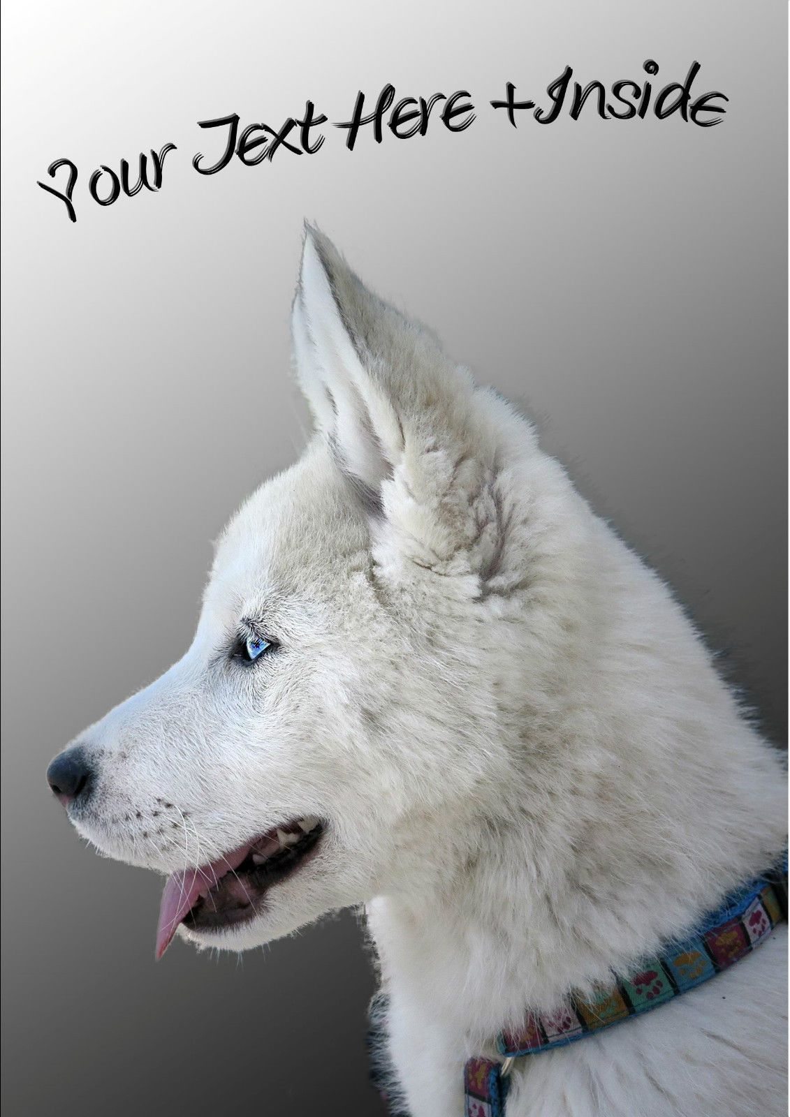 3 99 Gbp Personalised White Siberian Husky Birthday Any Occasion