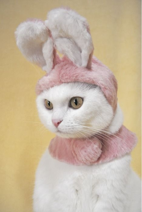 Now I can have that bunny I've always wanted! by turning Pandora into it! She'll be okay with I'm sure