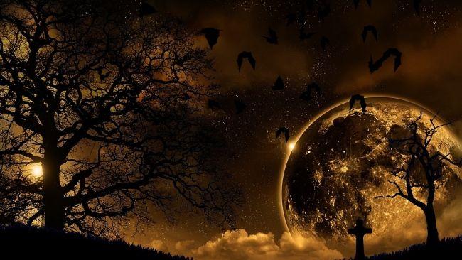 Download 1920x1080 HD Wallpaper night tree moon scary bat