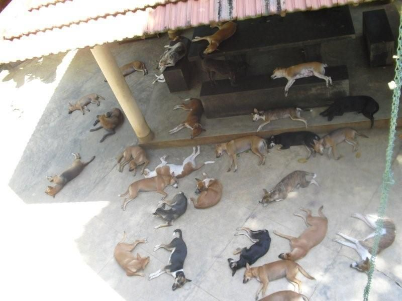 Sheltered dogs relaxing in heat of day (Animal SOS