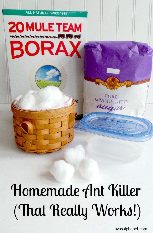 homemade ant killer (that really works | family joy blog link up
