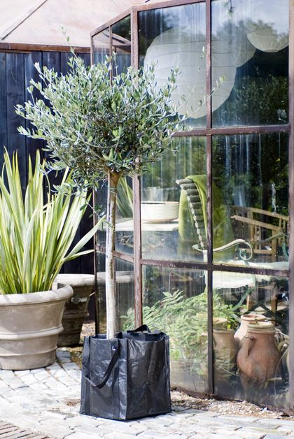 Boom In Pot Op Balkon.Via Tuinieren Nl Garden Living Kleine Bomen Tuinieren En Balkon