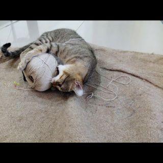 Un clásico: gato con ovillo.