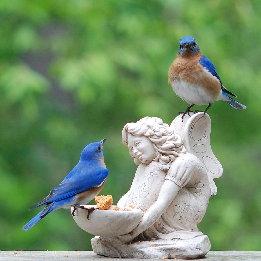 Bluebirds on a fairy statue feeder