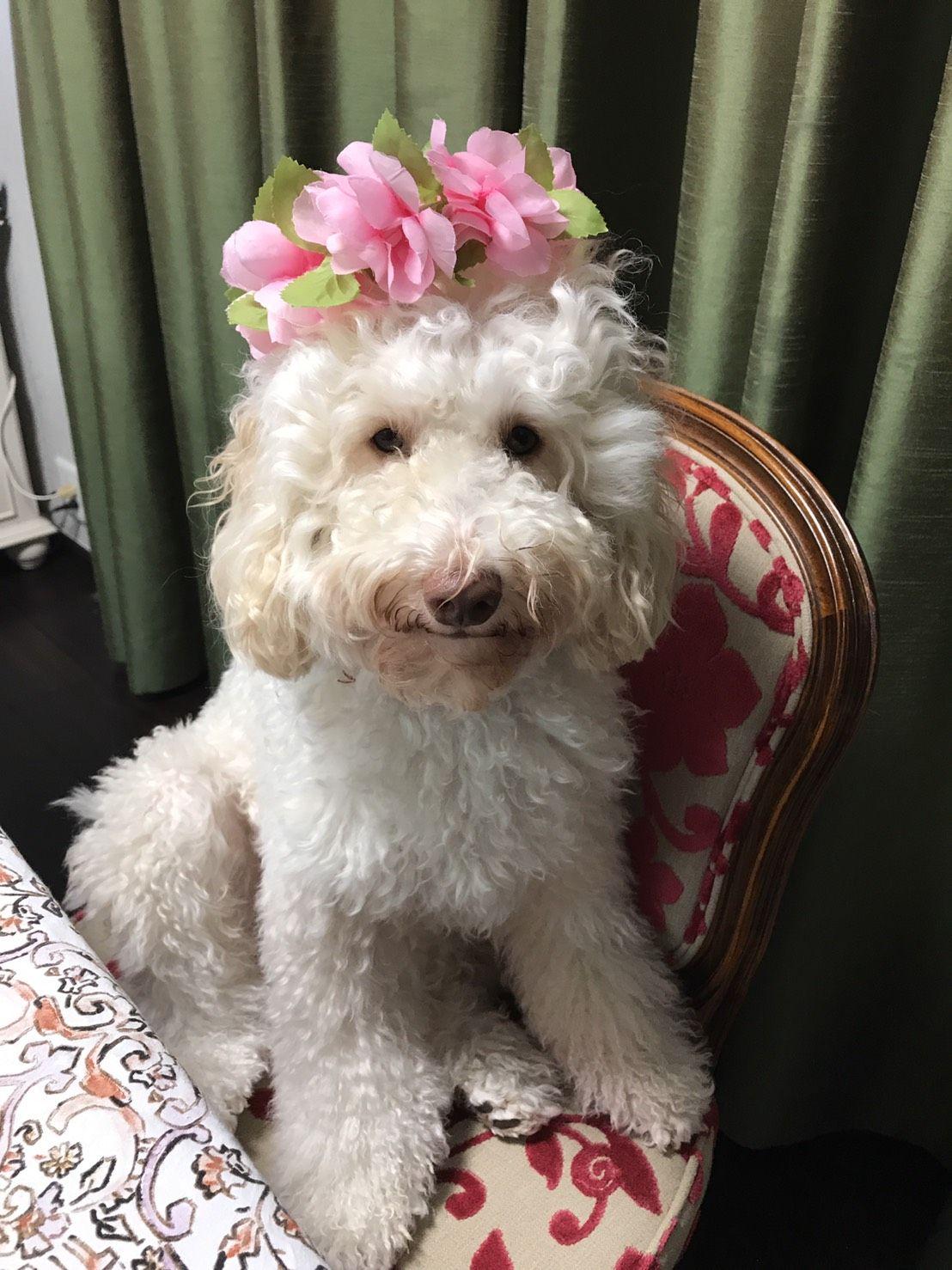 Craigslist Augusta Maine Pets - Wayang Pets