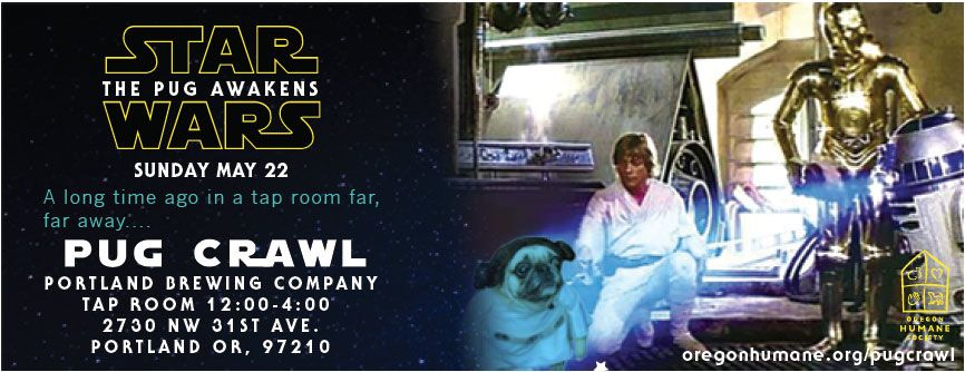 From Jedis to Siths, this year's theme pays homage to all things Star Wars  as Pugs fill the streets for annual event and parade.