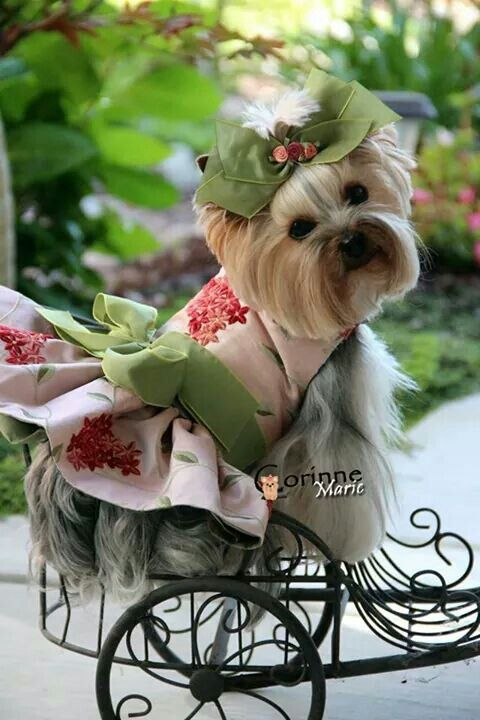 .cute Bella Dog...love her outfit