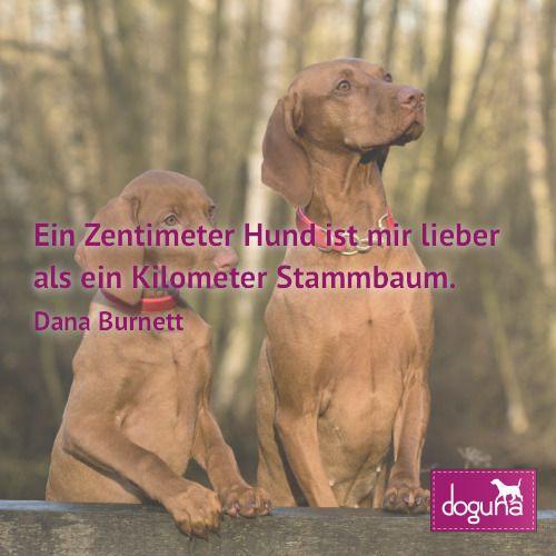 Ein Zentimeter Hund Ist Mir Lieber Als Ein Kilometer Stammbaum Dana Burnett Hund Hunde Dog Dogs Dogsofinstagram Love Hundeschule Hundeverhalten Hunde