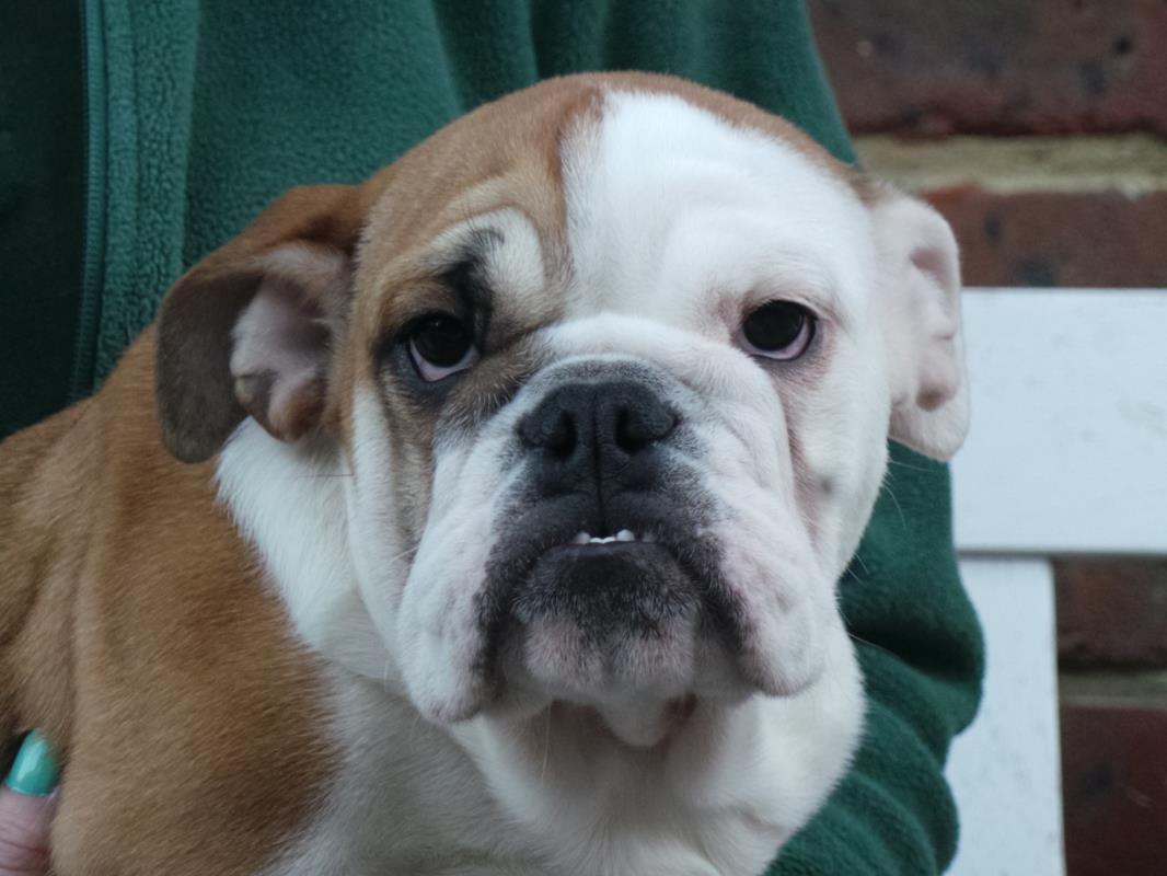 Maggie - Dogs Trust