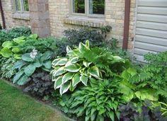 schattenpflanzen der schattenplatz als kleine oase garten pflanzen. Black Bedroom Furniture Sets. Home Design Ideas