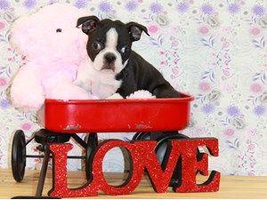 Pet Stores In Iowa City Pet Supplies Buy Puppies In Iowa City Pet Suppilies Dog Training In Iowa City Buy Puppies Puppies Pet Store