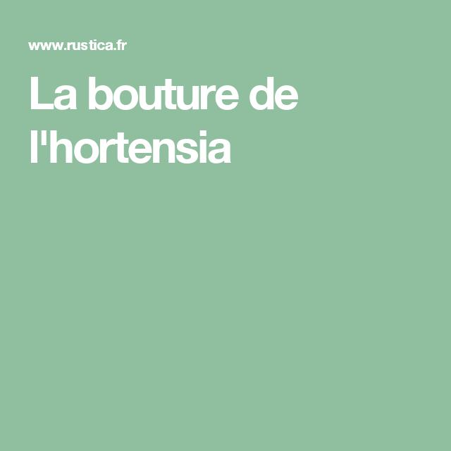 Les 25 meilleures id es concernant bouture d hortensia sur pinterest planter un hortensia - Comment bouturer un hortensia ...