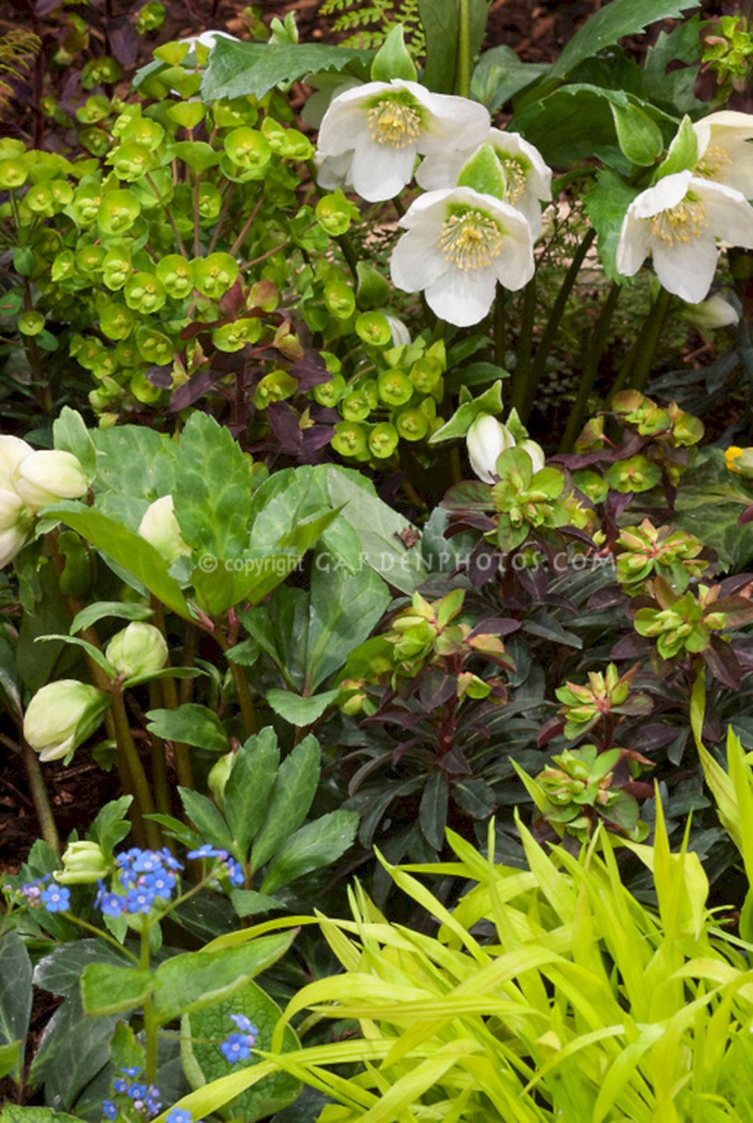 Astounding 75+ Best Planting Combination Ideas For Beautiful Garden Https://freshouz.com/75-best-planting-combi… | Beautiful Flowers Garden, Euphorbia Plant, Plants