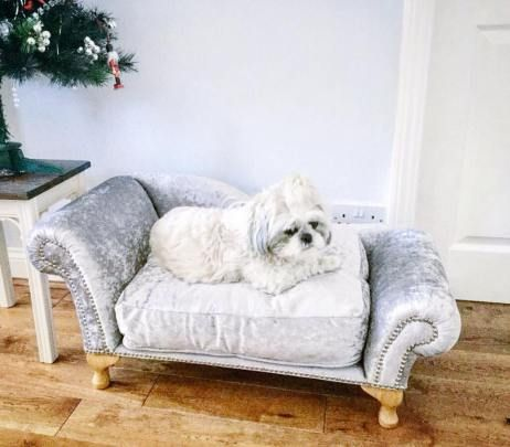 Chaise Lounge Dog Sofa Bed